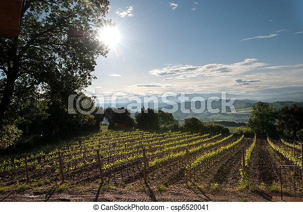 Vineyard in Tuscany - csp6520041
