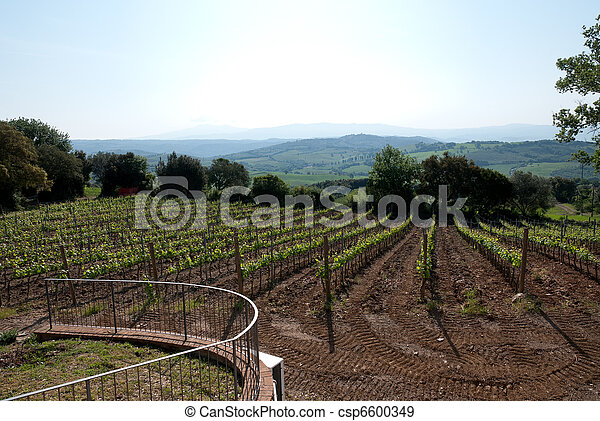 vineyard in Tuscany - csp6600349
