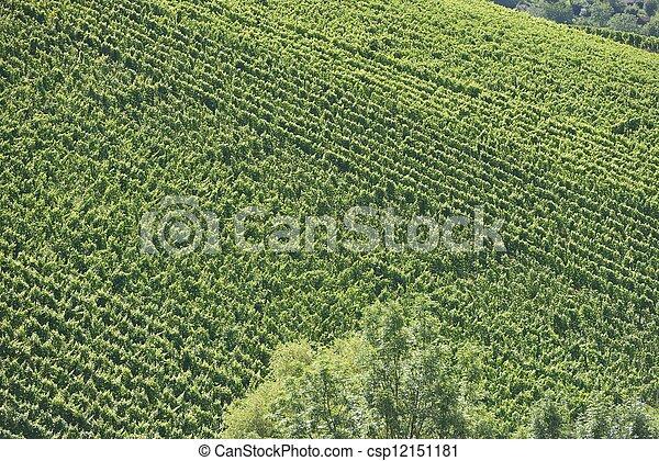 vineyard landscape #1, Stuttgart - csp12151181
