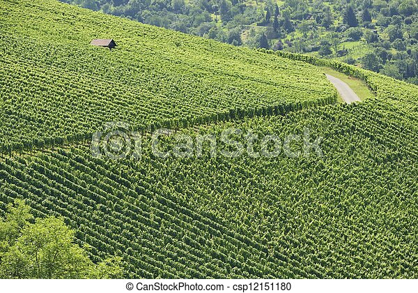 vineyard landscape #2, Stuttgart - csp12151180