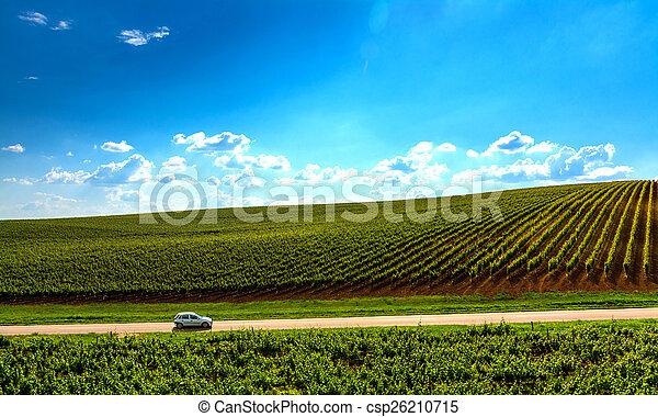 Vineyard Landscape - csp26210715