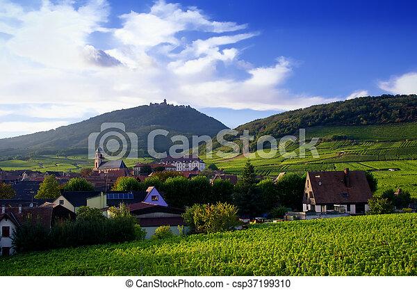 vineyard landscape - csp37199310