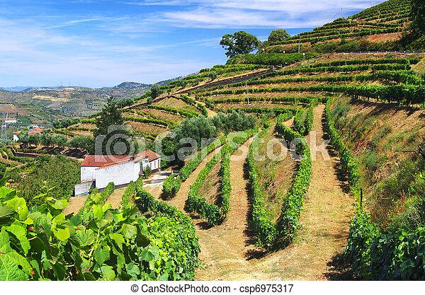 Vineyard Landscape - csp6975317