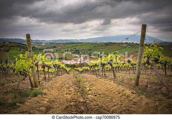 Vineyard Landscape - csp70086975