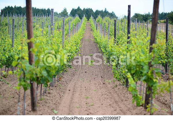 Vineyard landscape - csp20399987