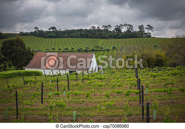 Vineyard Landscape - csp70086980
