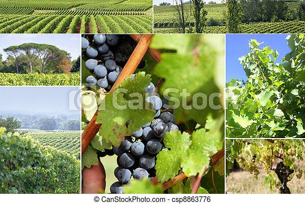 Vineyard Landscape - csp8863776