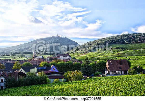 vineyard landscape - csp37201655