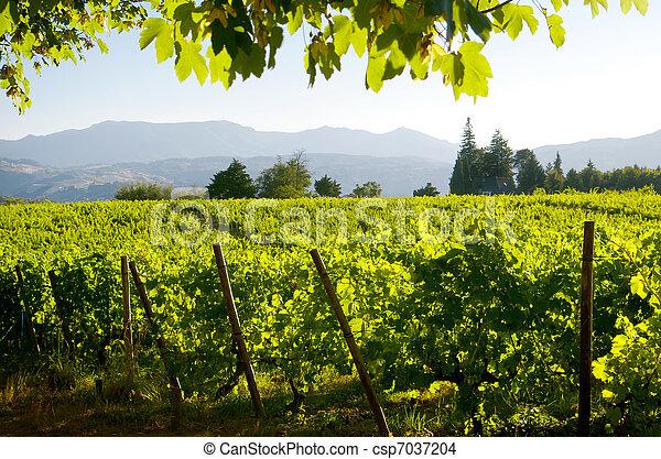 Vineyard Landscape - csp7037204