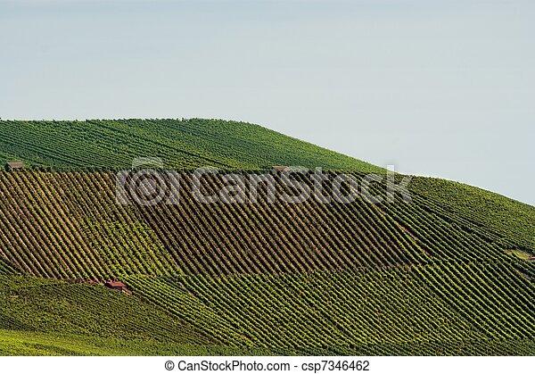 Vineyard Landscape - csp7346462
