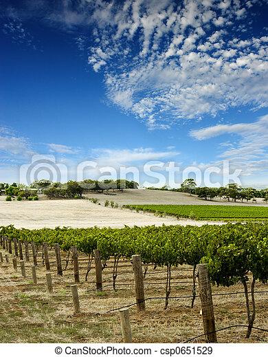 Vineyard Landscape - csp0651529
