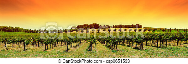 Vineyard Panorama Sunset - csp0651533
