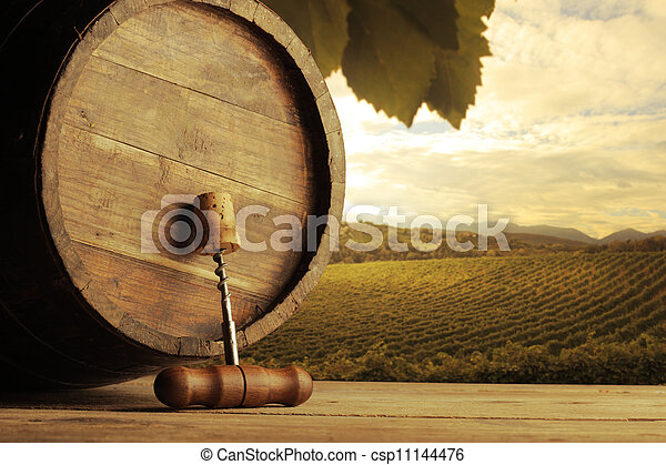 Vineyard - csp11144476