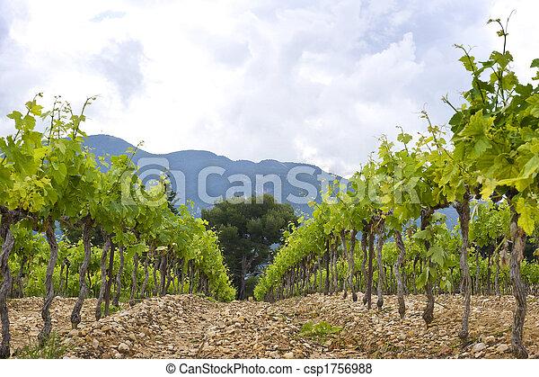 Vineyard - csp1756988