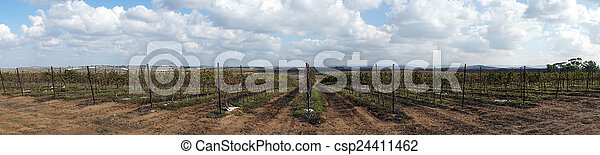 Vineyard - csp24411462