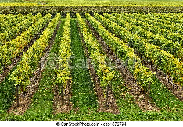 Vineyard - csp1872794