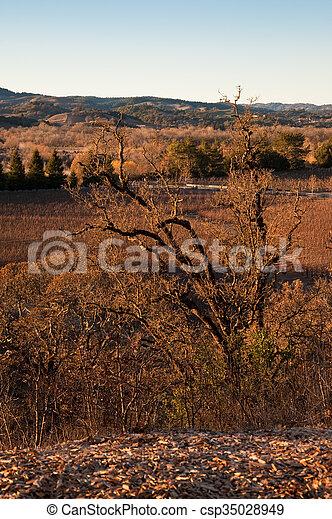 Vineyard - csp35028949
