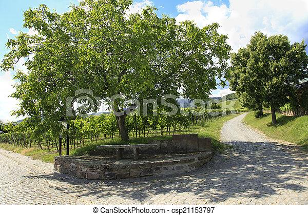 Vineyard - csp21153797