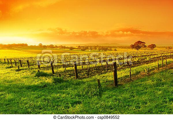 Vineyard Sunrise - csp0849552