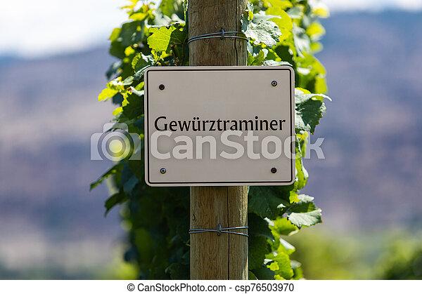 vineyard wine grape variety sign - csp76503970