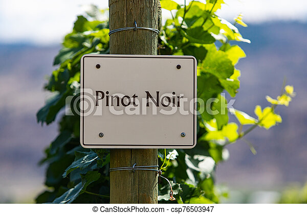 vineyard wine grape variety sign - csp76503947