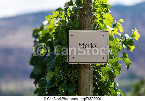 vineyard wine grape variety sign - csp76503990