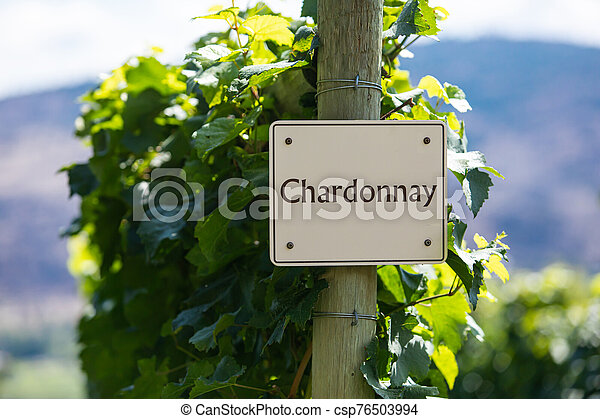 vineyard wine grape variety sign - csp76503994