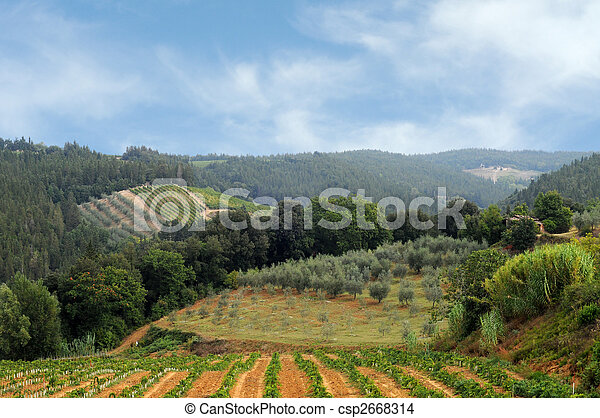 Vineyards and olive fields in Chianti, Tuscany - csp2668314