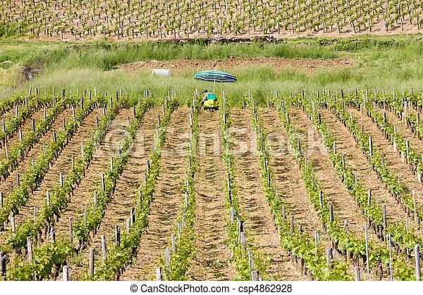 vineyards, Burgundy, France - csp4862928