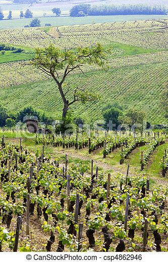 vineyards, Burgundy, France - csp4862946