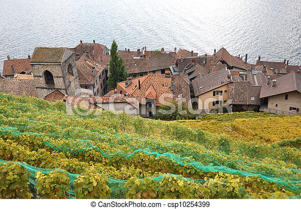 Vineyards in Lavaux region, Switzerland - csp10254399