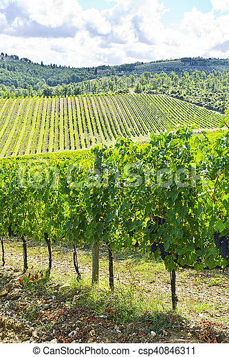 Vineyards in the Autumn - csp40846311