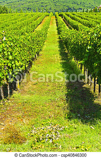 Vineyards in the Autumn - csp40846300