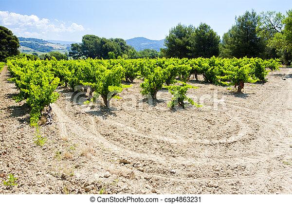 vineyards near Bandol, Provence, France - csp4863231