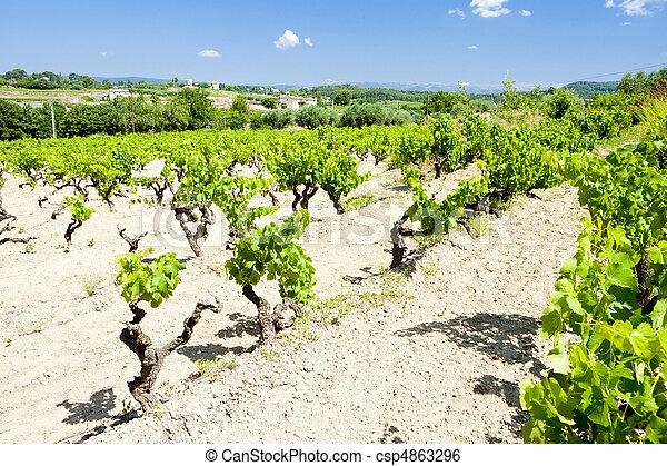 vineyards near Bandol, Provence, France - csp4863296