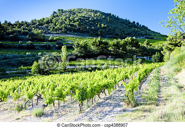 vineyards near Gigondas, Provence, France - csp4388907