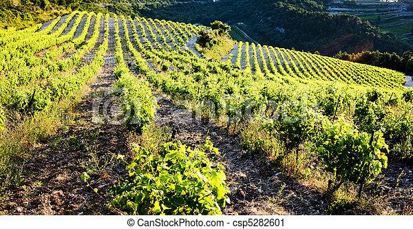 vineyards near Gigondas, Provence, France - csp5282601