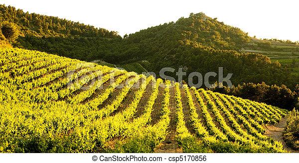vineyards near Gigondas, Provence, France - csp5170856