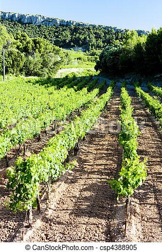 vineyards near Gigondas, Provence, France - csp4388905