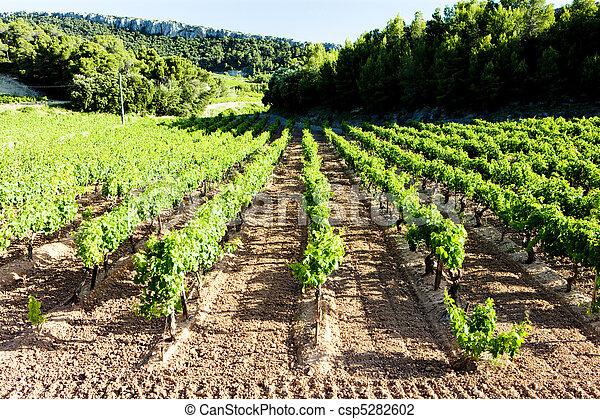 vineyards near Gigondas, Provence, France - csp5282602
