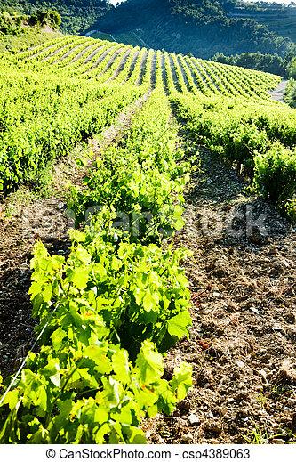 vineyards near Gigondas, Provence, France - csp4389063