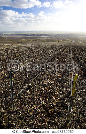 vineyards of Champagne Region, Burgundy, France - csp23162262