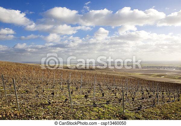 vineyards of Champagne Region, Burgundy, France - csp13460050