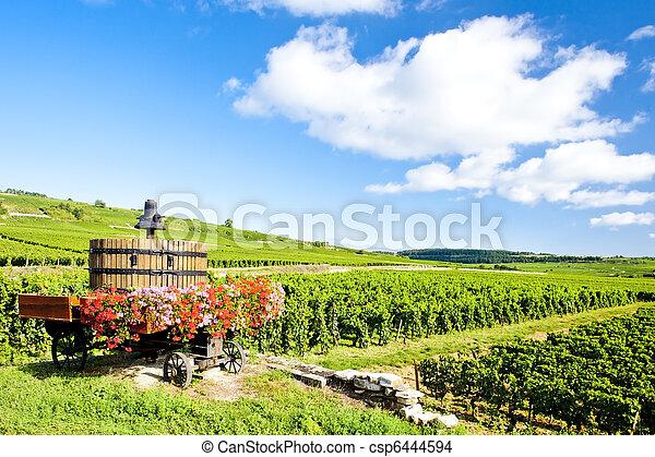 vineyards of Cote de Beaune near Pommard, Burgundy, France - csp6444594