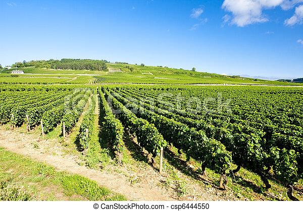 vineyards of Cote de Beaune near Pommard, Burgundy, France - csp6444550