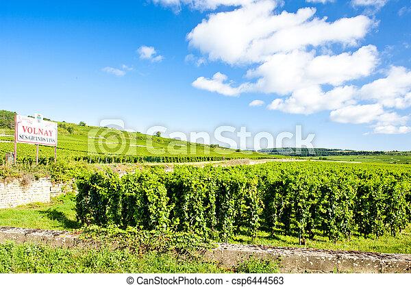 vineyards of Cote de Beaune near Volnay, Burgundy, France - csp6444563
