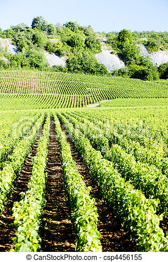 vineyards of Cote de Nuits, Burgundy, France - csp4456155