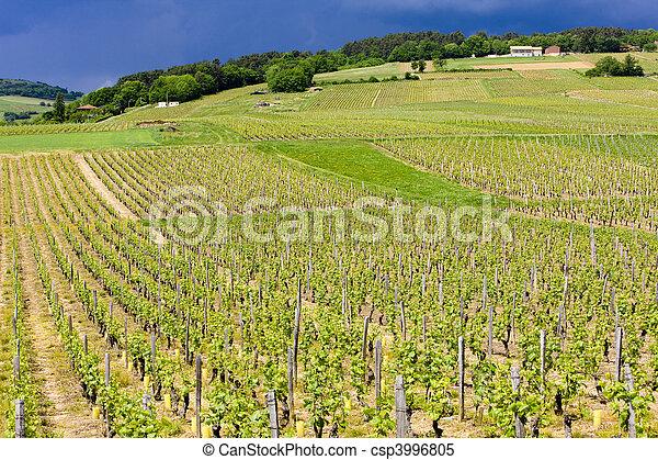 vineyards of Cote Maconnais, France - csp3996805