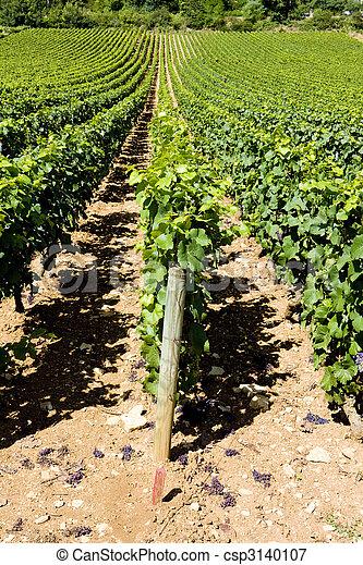 vineyards of Cote Maconnais region, Burgundy, France - csp3140107