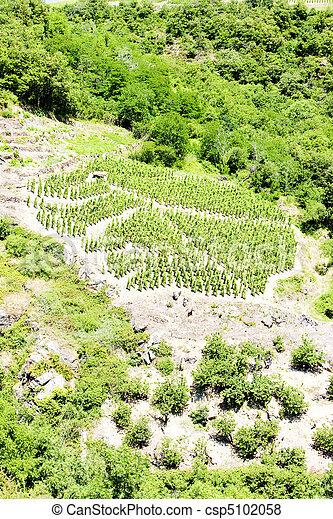 vineyards of Cote Rotie, Rhone-Alpes, France - csp5102058
